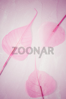 Transparent skeleton leaf with beautiful texture on pink background