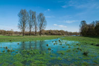 Naturschutzgebiet Walsum