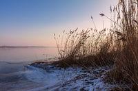 Schilf am Ufer des Salzhaff bei Rerik im Winter