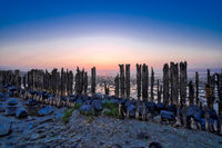 View of the Wadden Sea during sunset, at low tide. A colorful dramatic sky. Wooden posts as a silhouette in the mud. UNESCO. Wadden Sea World Heritage