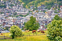 Town of Bormio and cow herd in Alpine landscape view