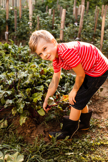 The boy rejoices after picking the fresh beet