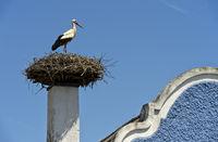 Weissstorch (Ciconia ciconia) am Storchennest auf einem Schornstein