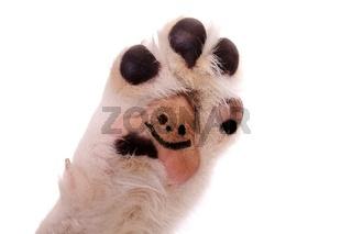 Hundepfote mit Smile