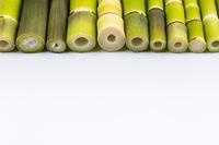 fresh little bamboo shoots isolated