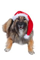 Cute dog with christmas costume