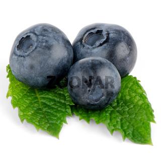 Ripe blueberry