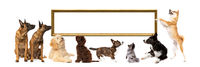 set of eight dogs looking up and sidewards