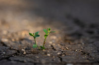 Green plant growing from crackling earth in sunlit