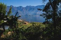 Tropical plants along the coast of lake Atitlan with view to the volcanic mountain range in San Pedro la Laguna, Guatemala