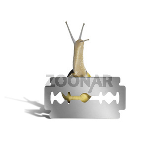 Grove snail and razor blade