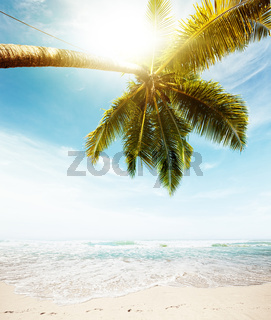 Perfect tropical beach in sunny day