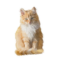 Fluffy red cat isolated on white background. Digital illustration.