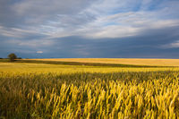Before rain in Central Bohemian Uplands