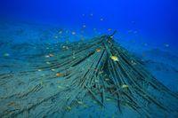Künstliches Korallenriff, Artificial reef