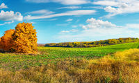 Autumn field at sunny day