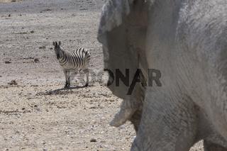 Zebra und Elefant im Etosha Nationalpark