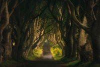 The Dark Hedges, filming location of popular TV show, Game of Thrones