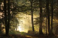 Sunrise in the autumn forest