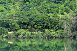 Green trees by the lake