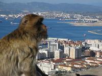 Affe blickt über Gibraltar