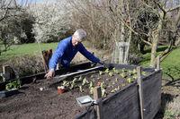 Hobbygärtner säht Gemüse mit einem Saatband im Hochbeet