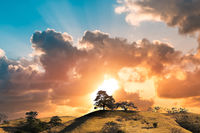 tree on hill with evening sun and sunset sky landscape background