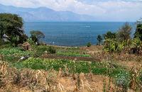 Small vegetable agricultural field along lake Atitlan in San Pedro la Laguna, Guatemala