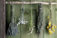 verschiedene Kräutersträuße hängend vor grüner Holzwand