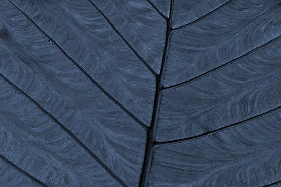 Cyanographie eines Blattes