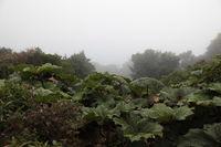 Vulcano Poas in Costa Rica