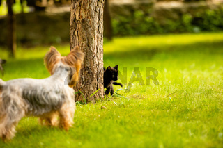 Dog has caught a kitten on a tree trunk and holding it