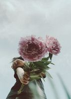 Flower peony in hand on sky background