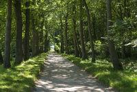 Landschaftsgarten und Schlosspark Lütetsburg