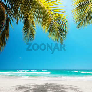 Idyllic tropical beach in sunny day