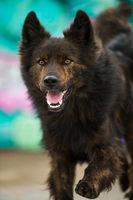 Big dog on colorful background