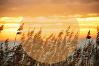 Beach Grass At Sunrise Or Sunset, Copy Space