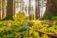 Sunshine falls into a autumn forest with a heart shaped leave and a growing mushroom as concept for the wonderful colored fall season.