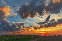 Sonnenuntergang mit dunklen Wolken über Landschaft mit Wiese und Röhricht
