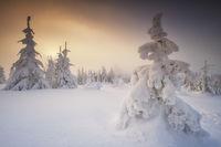 Winterzauber am Dreisessel