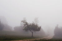 Kiesental im Nebel