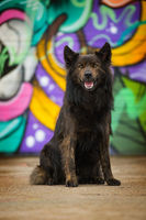Big dog on colorful background