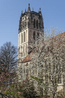 Bluehender Baum vor der Liebfrauen-Ueberwasser Kirche, Muenster, Westfalen, Deutschland, Europa