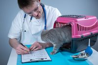 Male veterinarian takes notes on health check of gray Scottish Straight kitten in animal carrier on examination table in clinic. Veterinarian wiriting on clipboard near tabby cat. Check health animal