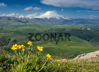 Mount Elbrus and yellow flowers