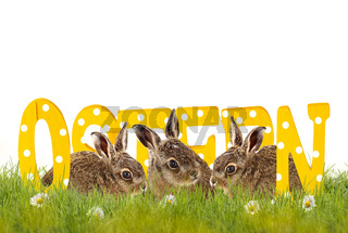 three Easter bunnies sitting in meadow with wooden letters (Ostern)