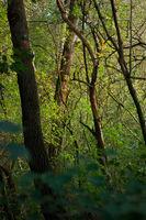 Bäume im Grünen