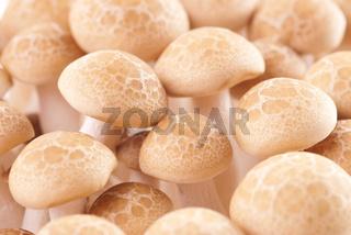 Fresh mushroom group.