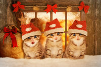Three kittens at Christmas sitting in front of a window.