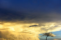 Dry tree during sunset with big rain clouds